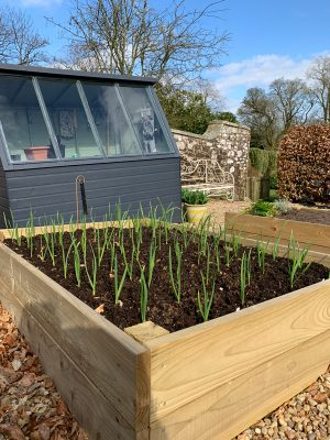 2019 Kitchen Garden Plans & Projects
