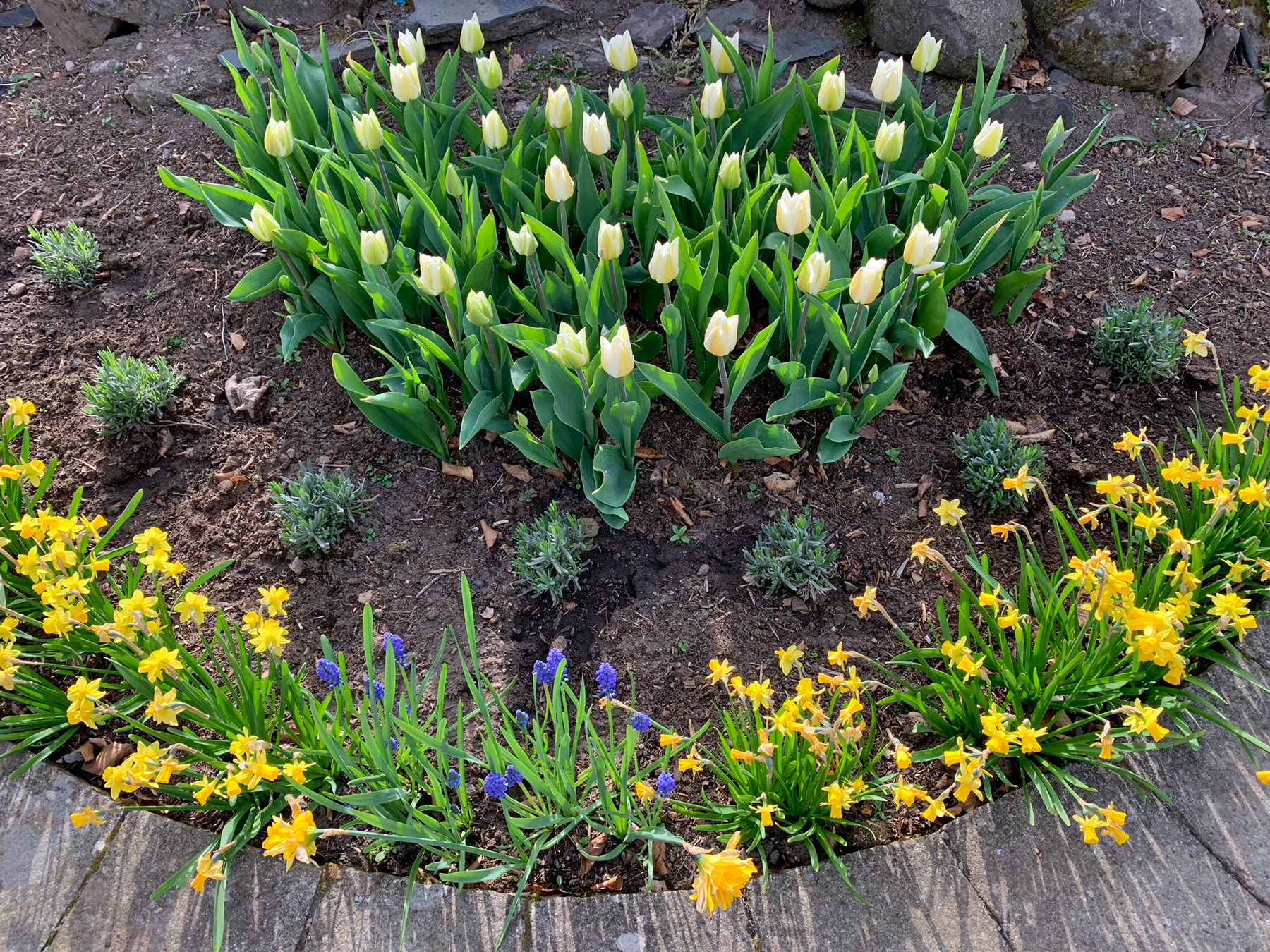 Spring Projects, Planting Out & A Photo Diary