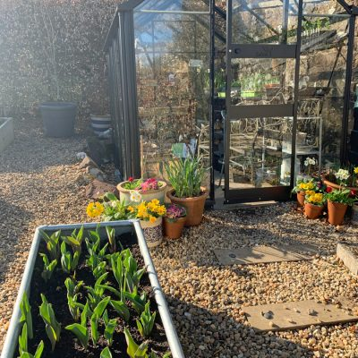 2021 Early Spring Garden Projects